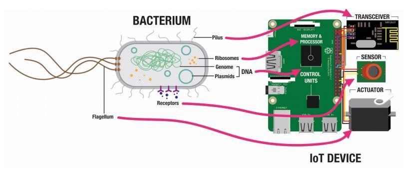 bacterial devices - Bakterie jako nośnik informacji? Imponująca przyszłość IoT ibiohacking - netcomplex